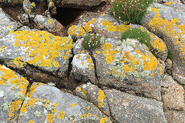 Lichen covered rocks, Cornwall